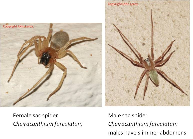 Part 4 - SAC SPIDERS MAY BE OFF THE HOOK!